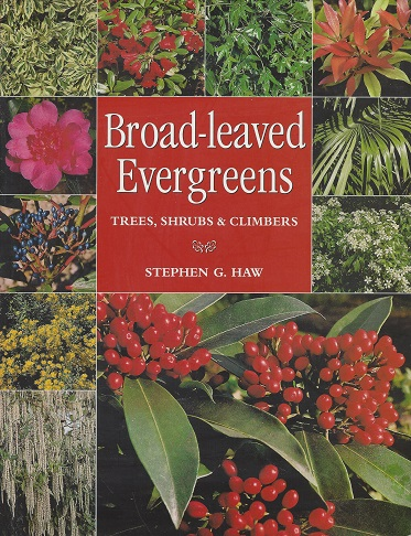 Image for Broad-Leaved Evergreens:  Trees, Shrubs & Climbers