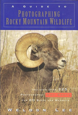 Image for A Guide to Photographing Rocky Mountain Wildlife